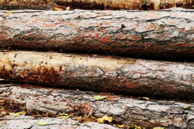17511895-couper-les-troncs-d-arbres-couchés-dans-les-bois.jpg